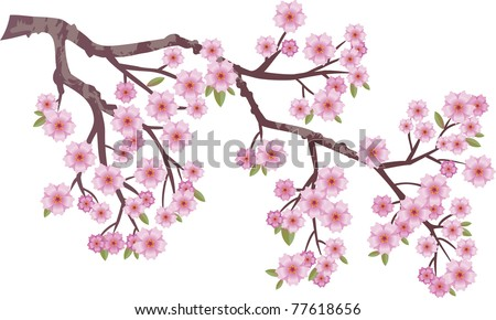 Oriental cherry branch with flowers