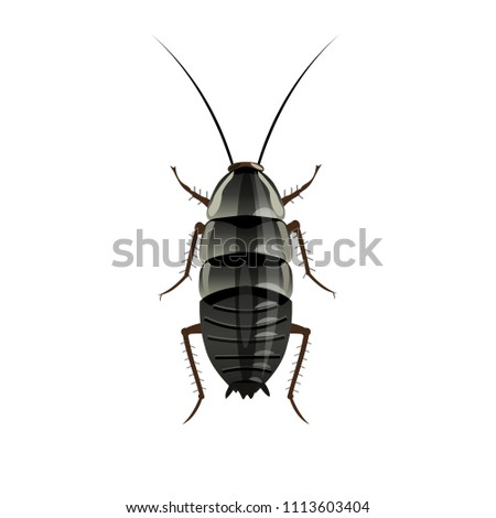 Oriental cockroach image. Vector illustration isolated on white background
