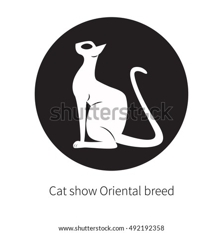 oriental shorthair cat isolated