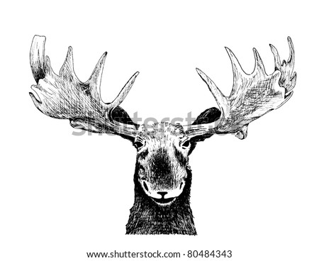 original black white hand drawn pen art illustrated animal sketch of funny wild moose head, antlers ear face eyes and nose isolated on white background for fun happy Christmas card humor, vector 10eps