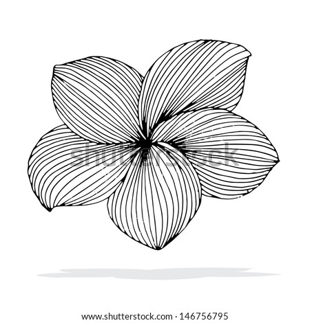 original drawing of frangipani