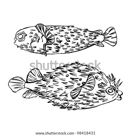 Original drawing of two fish - spine porcupine fish also know as spiny balloon fish