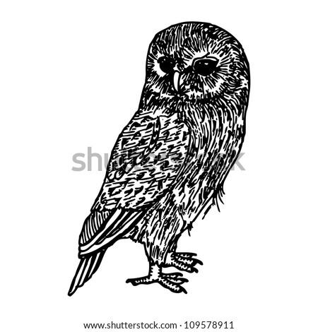 original hand drawing of owl