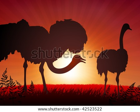 Original Vector Illustration: ostrich on sunset background AI8 compatible