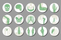 Orthopedic and spine vector icons. Human bone of illustration and anatomy skeleton bone x-ray image