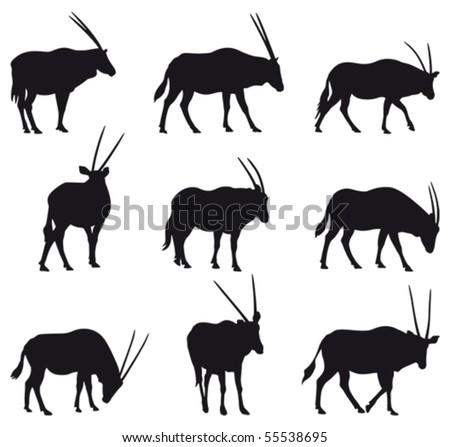 Oryx gazela: long horned gazelle black silhouettes, nine different postures