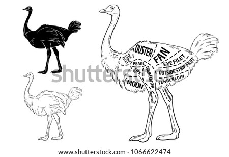 ostrich meat cuts with elements and names. Isolated black on white background. Butcher shop. Vector illustration.