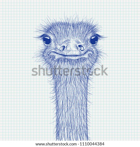 Ostrich sketch. Head closeup on lined paper background. Vector illustration