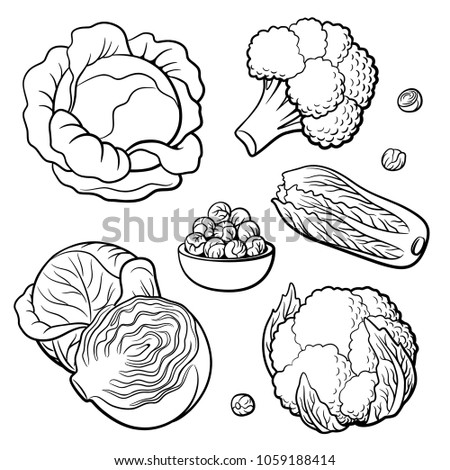 Outline hand drawn set of vegetables. Cabbage, broccoli, cauliflower, Chinese cabbage and Brussels sprouts. Black and white vector illustration, isolated on white background