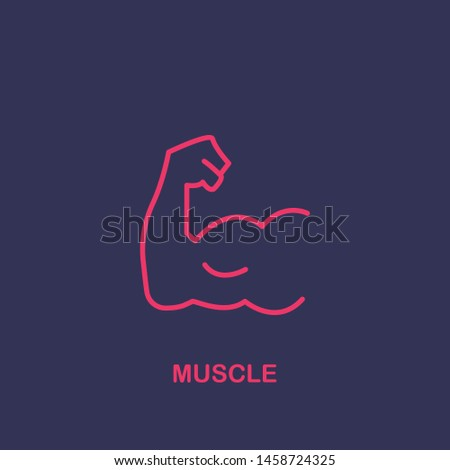 Outline muscle icon.muscle vector illustration. Symbol for web and mobile