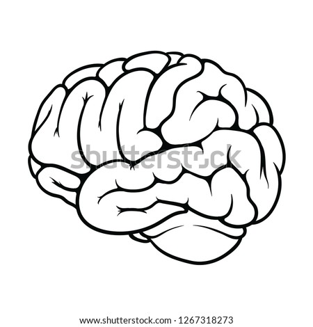 Outline of a brain on the white background