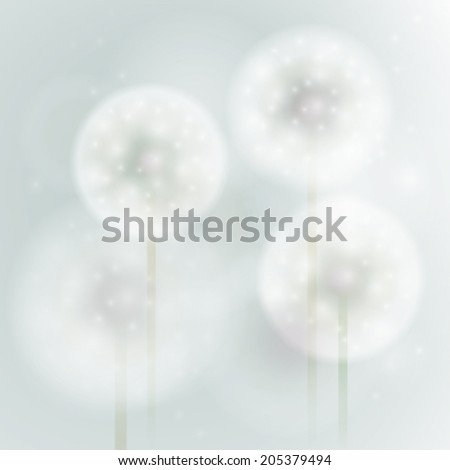 overblown dandelion   softly