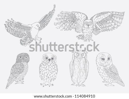 owl collection,