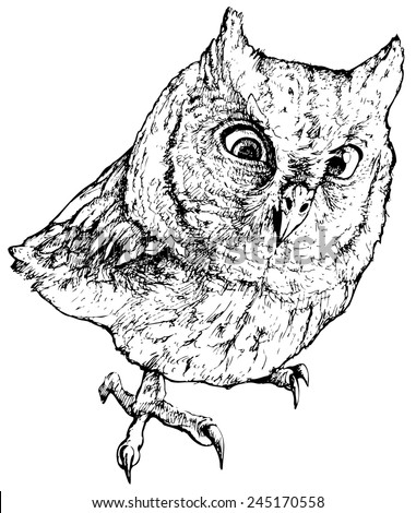 Owl beak drawing