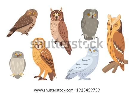 Owl species set. Brown, barn, horned, snowy, eagle, hawk owls isolated on white. Vector illustration for wild animals, wildlife, forest birds concept Сток-фото ©