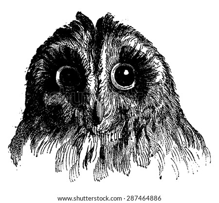 Owl, vintage engraved illustration. Earth before man - 1886.