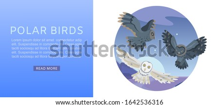 owls  night sky with flying
