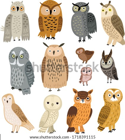Owls. Vector set of different owls