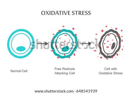 Shutterstock Oxidative Stress Diagram. Vector illustration flat design