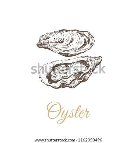 Oyster sketch vector illustration. oyster shell