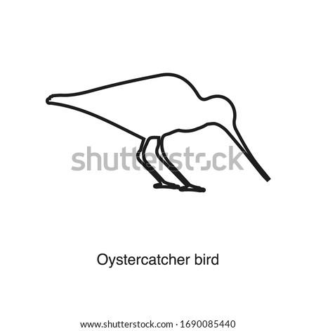 oystercatcher bird icon vector