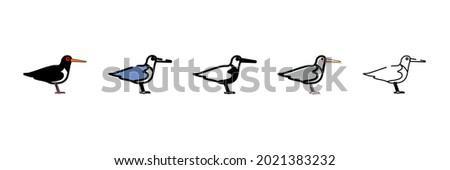 oystercatcher bird vector type