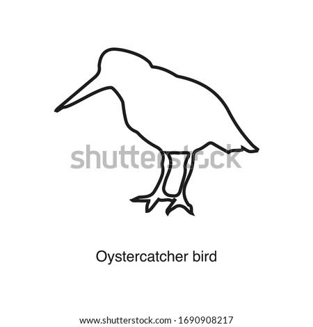 oystercatcher icon vector on