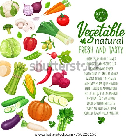 Page design with vector vegetables. Concept healthy food. Cabbage or pepper, beets and carrots. Onion, zucchini, eggplant and asparagus. Corn, celery and mushrooms.
