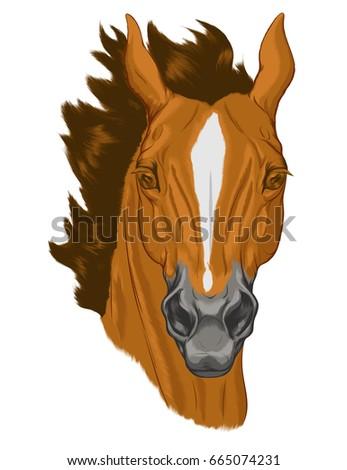 Equine facial marking