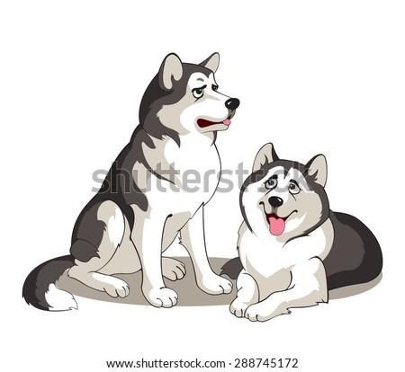 pair of alaskan malamutes