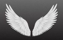 Pair of beautiful white angel wings isolated on transparent background, realistic vector illustration. Spirituality and freedom concept