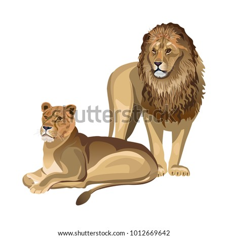 Pair of lions. Lioness lying down and male lion standing. Vector illustration isolated on the white background