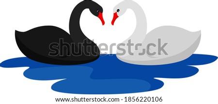pair of swans  illustration