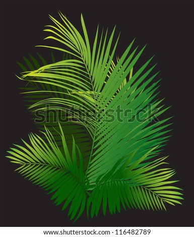 palm branch (tropical plants vector illustration)