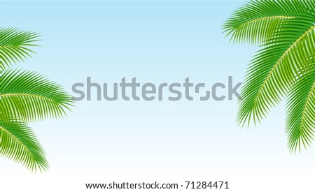Palm branches against the blue sky. Vector illustration.