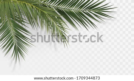 Palm branches in the corner, tropical plants decoration element Foto stock ©