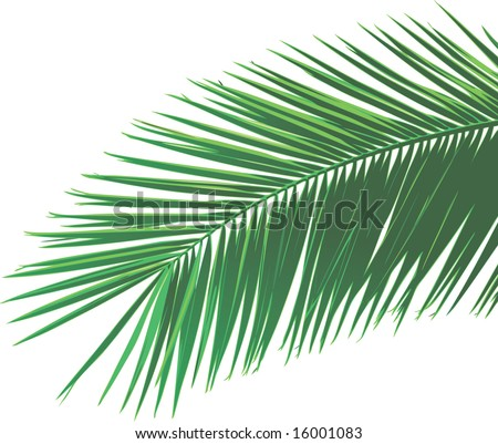 Palm Leaf Template http://www.shutterstock.com/pic-16001083/stock-vector-palm-leaf.html