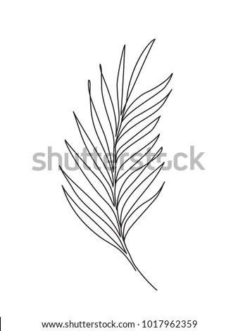 palm leaf line art contour