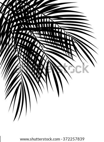 palm leaf vector background