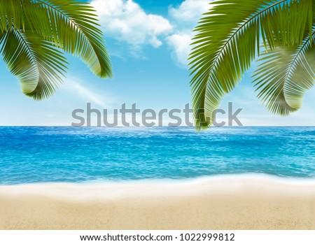 palm leaves on beach vector