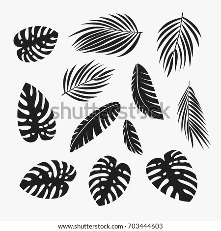 Palm leaves set. Banana, coconut, date palm leaves isolated on white background. Vector clip art.