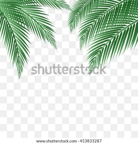 palm leaves vector background