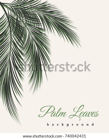 Palm leaves vintage background. Palm tree leaf feathers pattern vector african or brazilian wallpaper with text