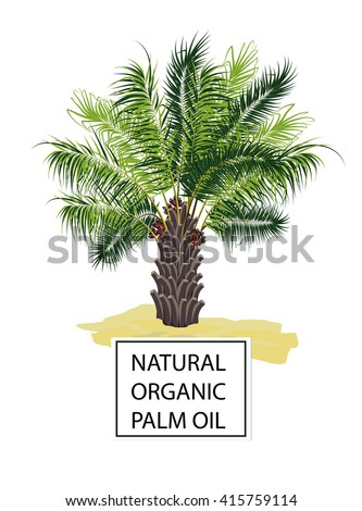 Palm oil tree on white background,vector illustration. Natural organic palm oil.  Raw materials for oil, animal feed, bio fuel and energy . Butter for soap.