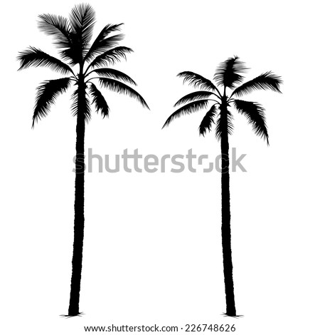 palm tree   black silhouettes