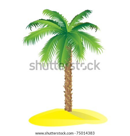 Palm tree isolated on white background / Vector