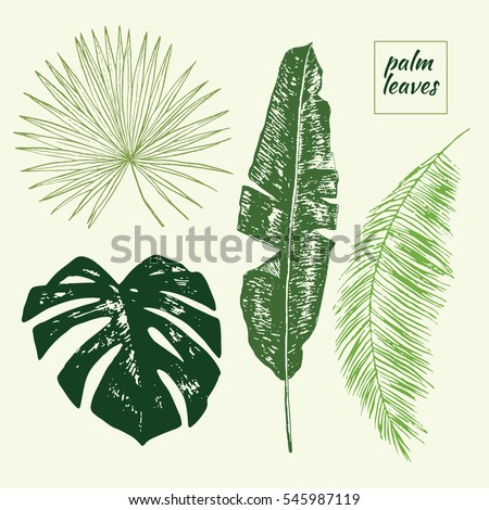 palm tree leaves set