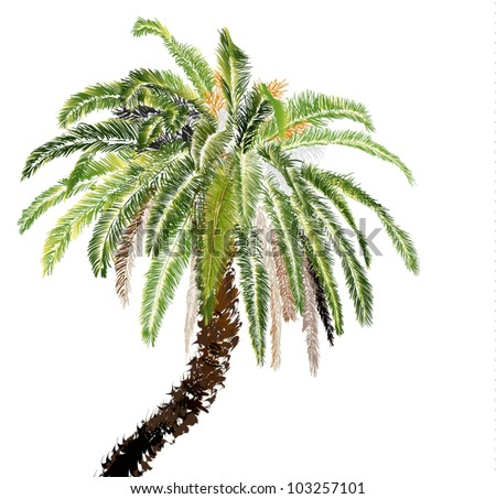 palm-tree on white background