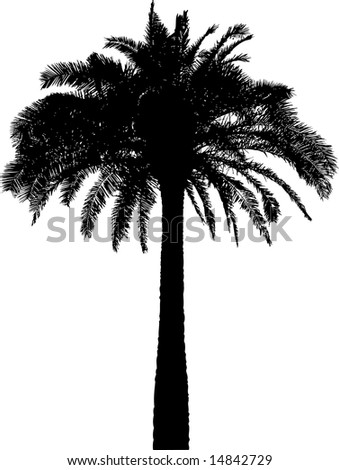 tree silhouette vector. stock vector : Palm tree