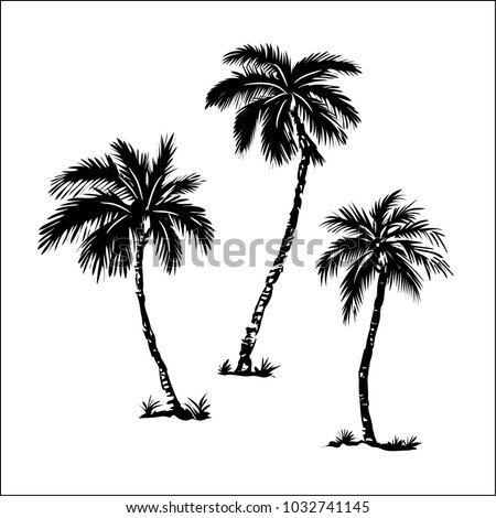 Palm trees, black silhouettes isolated on white background. Vector